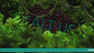 Video Intro ? - Natur jungle